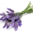 ingred_Lavender