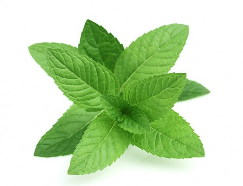 Peppermint Leaf Essential Oil